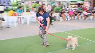 Dog Training & Tricks with Japanese Trainor