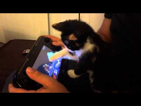 Cute kitten playing Super Smash Bros WiiU - Nintendo