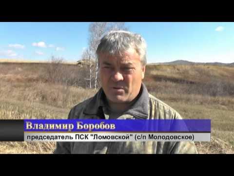 Все новости в россии и мире на newsland