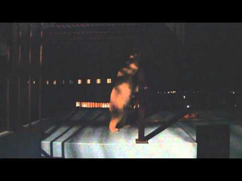 夜の動物園 ホッキョクグマ イコロの食事タイム 帯広動物園 PolarBear