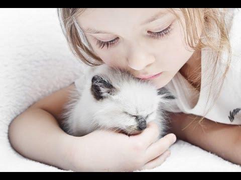 Котик Мурчик. Kitten Murchyk.