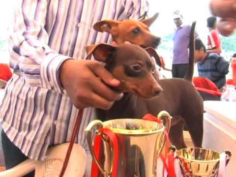 Dog Show in Pimpri Chinchwad | MPC News | Pune | Pimpri-Chinchwad