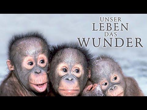 Unser Leben das Wunder (2012) [Dokumentation] | Film (deutsch)