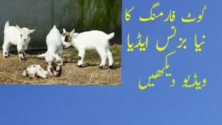 Business idea for goat farming in pakistan urdu/hindi