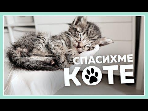 Как да се грижиш за малко котенце?    Праси среща коте за първи път!