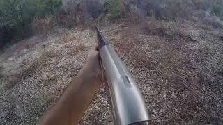 ouverture de la chasse au sanglier en battue en corse, le bon poste tir d'un beau sanglier