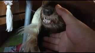 Смешное видео про собаку Funny dog