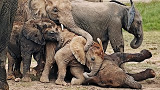 Funny Baby Elephant Has Fun at the Waterhole