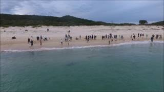 Sharks at Fingal Bay NSW. Watch in HD