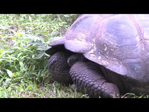 Mother Son Travel Episode 2 Part 1 of 2: The Galapagos (1080P)