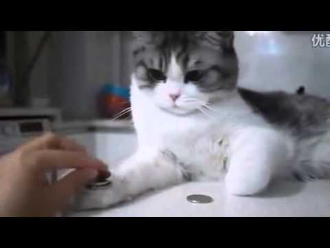 Funny Videos Of Fat Cats Falling