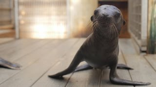 "Sea Lion ""Pupdate"": Gender Reveal"