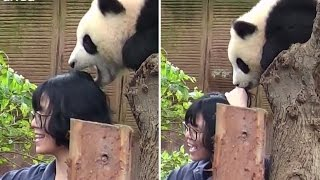 Adorable Panda Tries To Stop Selfie By Eating Woman's Hair