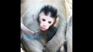 Super Cute Infant Alex  Monkey / So Adorable Little Baby Alex .