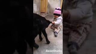 Funny Baby 2019 ||baby and Bakra||