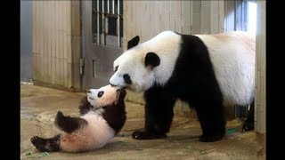 Cute Animals - Cute Baby Panda Videos Compilation - Soo Cute #2