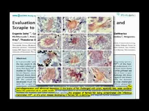 The Latest in Human Nutrition 2010 - Michael Greger MD
