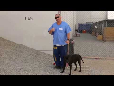 Inmate trains pit bull to do search and rescue