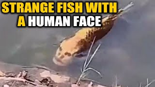 Fish with a human face found in china, video goes viral | Oneindia News