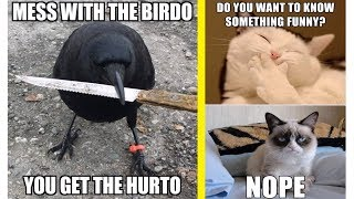Funny Animal Memes Try Not To Laugh