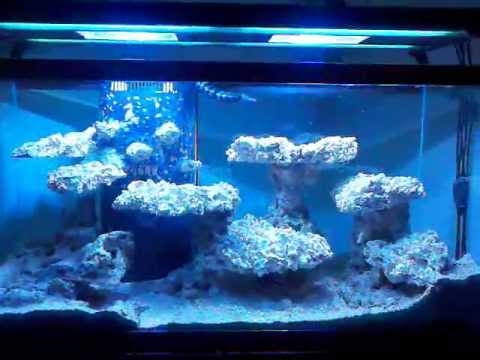 90 gallon bonsai shelf aquascape - YouTube