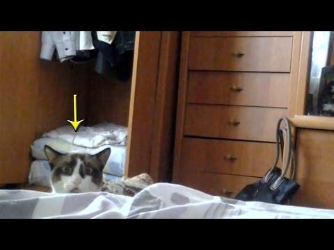 チラッっと偵察♪猫が覗きます。ゆっくりと引っ込みます。