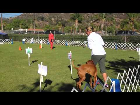Akc rally novice a debut youtube