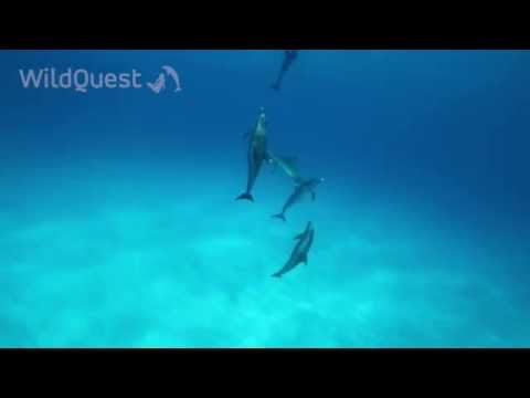 Dolphin Tales 6-2014 - Underwater Wild Dolphins Encounters