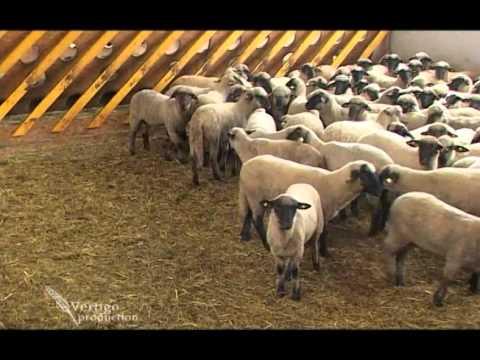 Farma ovaca u Austriji - U nasem ataru 368.wmv