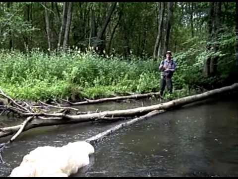 Форель на лесных речках Ленобласти