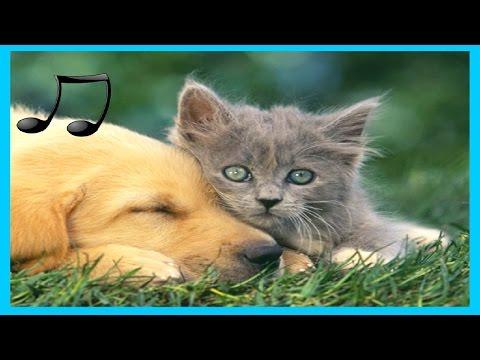 Musik Entspannende Für Hunde ,Katzen ,Musik Zum Schlafen Tiere 9 #GLMusik