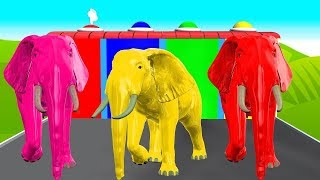 Learn Colors With Elephant Animals And Learn Shapes Surprise Egg Colours For Baby