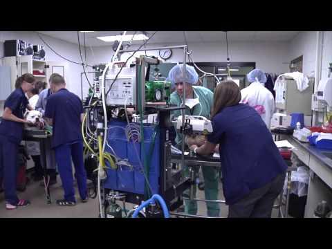 Limb Preservation Showcase Video 2014