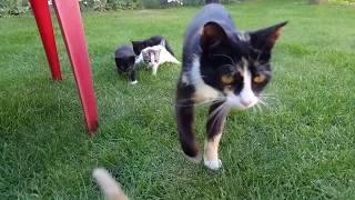 FUNNY CATS PLAYING ON GRASS VIDEOS 2018