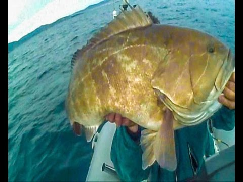 grouper  ΣΦΥΡΙΔΑ ΣΥΡΤΗ-Ν6-- 18,300kg sotos fishing.wmv