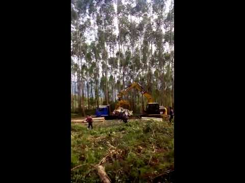 VID 20131028-Log Grapple made by Hongwing Heavy Industry Co., Ltd