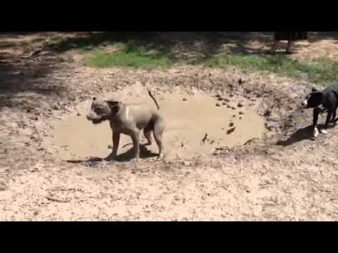 泥の水たまりでどろどろな...