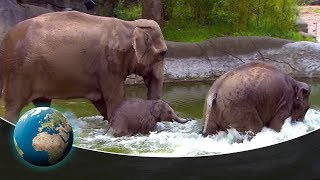 Cute & curious little fur friends - Poolparty in the elephant pond