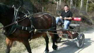Jürg and Roger drives horse and carriage in Sweden.