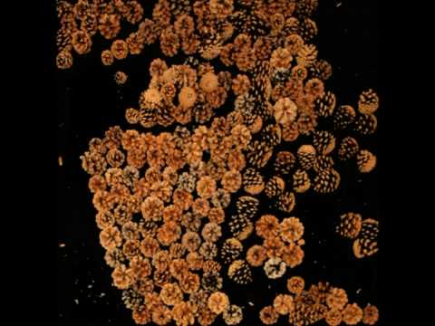 Pine cones - Goodbye Art