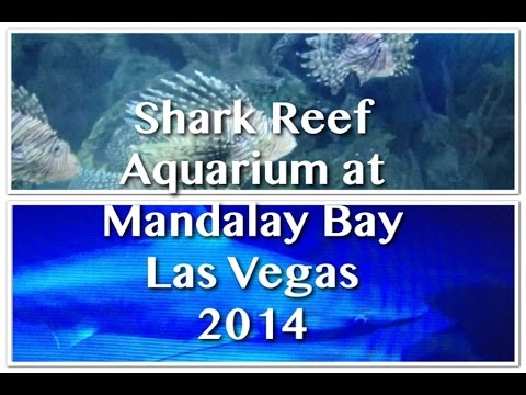 Shark Reef Aquarium at Mandalay Bay Las Vegas 2014