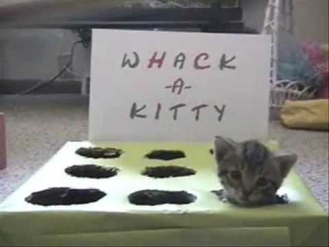 Whack-A-Kitty Video