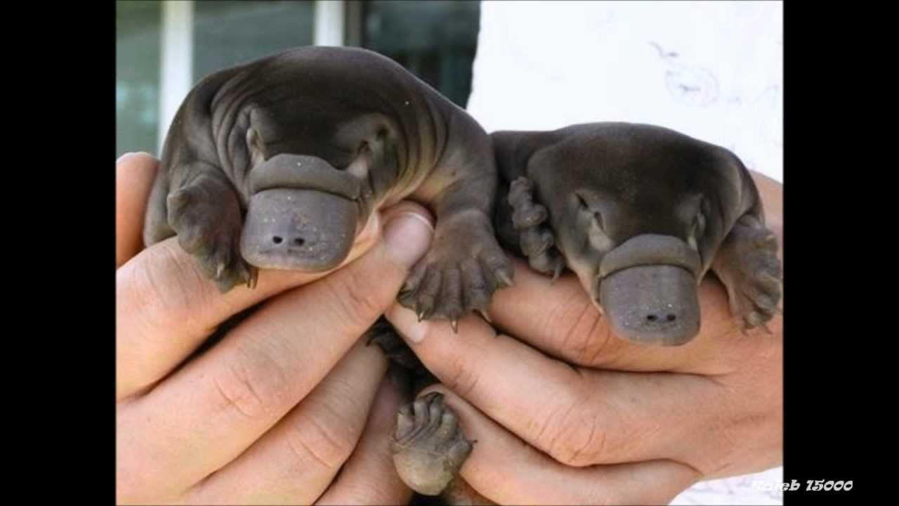 Real Mini Animals Miniature Animals