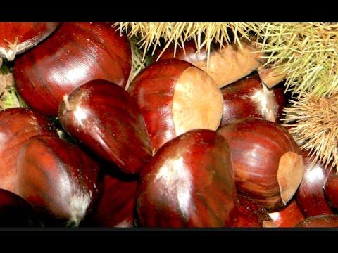 Chestnut-съедобный каштан.