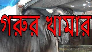 গরুর খামার ভিডিওটি দেখলে উপকৃত হবেন II COW SHATKHIRA Banglar Krishi !!