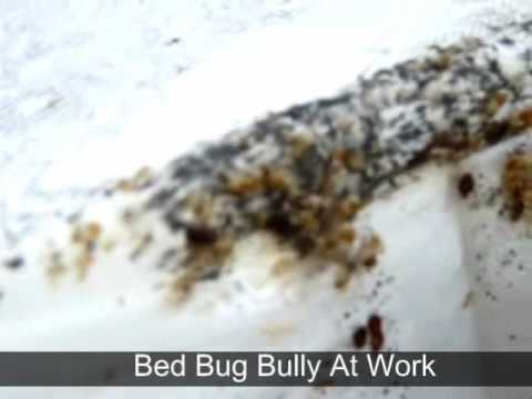 Bed Bug Bully >> Bed Bug Bully At Work.flv - YouTube