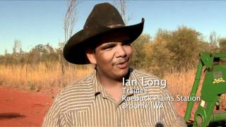 Live cattle export: important to northern Australia