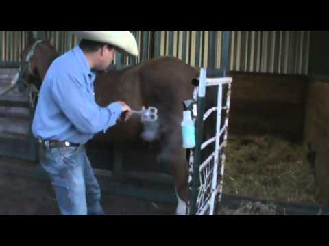 "Me and the boys Freeze branding Traces horse ""Dudley"""