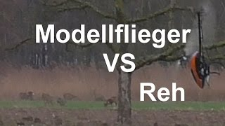 Modellflieger VS Reh Crash