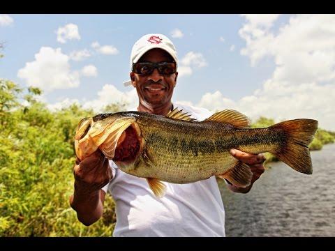 Florida Everglades Top Water Largemouth Bass Fishing